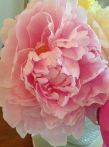 Peony - Secret Gardens and Cakes blog - Charis White