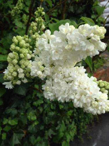 White Fire and Felt slippers - bathtime - Botanicals Blog - Charis White