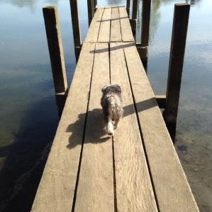Henley on Thames - Botanicals blog - Charis White