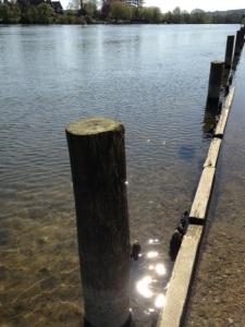 Thames - Botanicals blog - Charis White