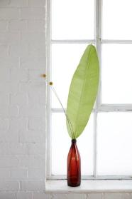 leaf in bottle still life. Dfs/French Connection. Photo: Dan Annett, Styling, Charis White