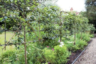 espaliered trees in Karen Kenney of Indigo Rye's garden. Charis White blo