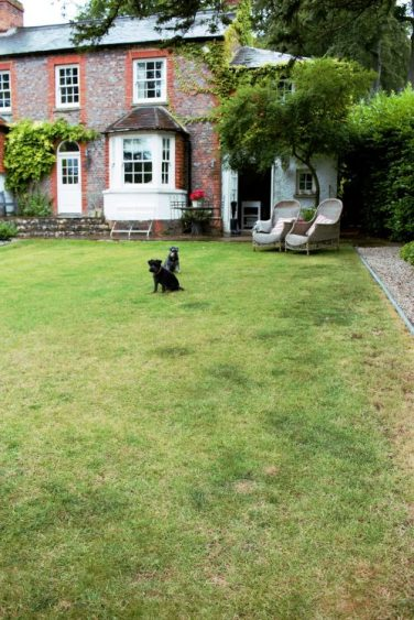 Karen Kennedy of Indigo Rye's house and miniature schnauzers for Charis White blog
