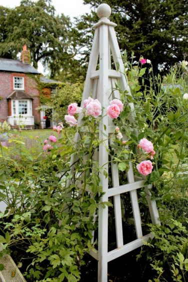 Topiary Rose frame in Karen Kennedy of Indigo Rye's garden for Charis White blog