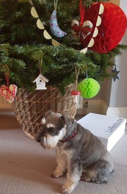 Panda the miniature schnauzer under the Christmas Tree on Charis White Interiors blog Christmas Gift Guide 2018
